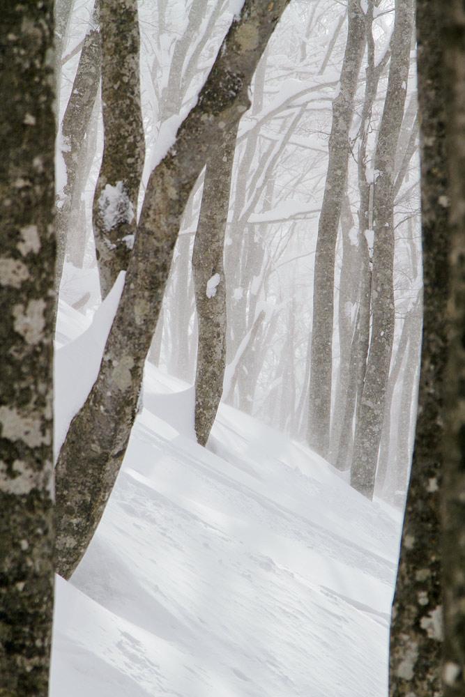 Parhaimmillaan Hakuba Cortinan offarimetsissä on satumainen tunnelma auringon pilkahdellessa runkojen välistä.