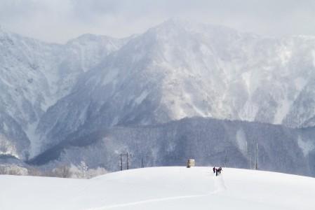 Hakuba Cortinan maasto on ylhäältä alas metsäistä, mutta pääosaltaan laskemiseen sopivan harvaa.
