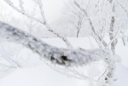 Hakuba Norikuran kuuraisissa metsissä on hiljaista, vaikka vastapuolen Cortinassa hisseillä saavutettavat metsät vilisevät laskijoita.