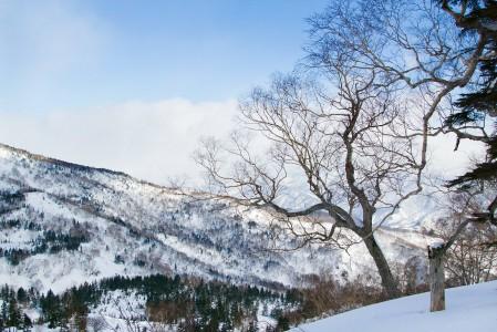 Hakuba Tsugaiken takamaastossa saa olla omassa rauhassa. Täällä koskemattomasta lumesta ei tarvitse taistella kuten laakson perällä Cortinassa.