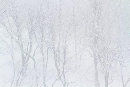 Tiuhassa lumisateessa kannattaa hakea kontrastia näkökenttään metsästä tai rinteen puolella metsän reunasta.