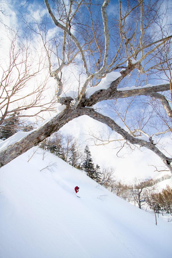 Tsugaike ja nousukarvat on mainio yhdistelmä. Tarjolla oli silkkisen pehmeää ja helposti laskettavaa koskematonta lunta.