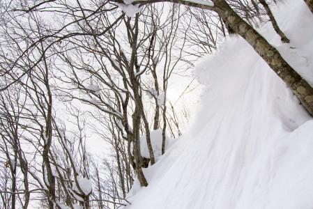 Japanilaismetsissä liikkuu pöllyäviä lumipilviä, joiden seasta pilkahtaa välillä myös laskija.