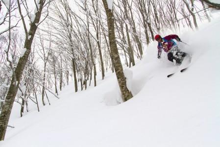 Hakuba Cortina tarkoittaa ensiluokkaista metsälaskua, mutta myös kovaa kisaa helpoimmin saavutettavista linjoista.