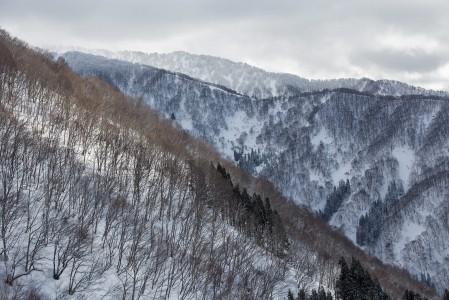 Nozawa Onsenin maasto on ylös asti puiden peittämää, joten näkyvyys on taattu kaikilla keleillä eikä jyrkemmätkään harjanteet ole aivan yhtä vyöryherkkiä kuin avoimet alueet.