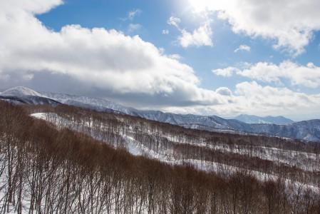 Nozawa Onsenin metsiin kätkeytyy runsaasti puuterintäyteisiä reittejä, joissa ei ole ruuhkaa. Paikalliset laskevat lähinnä rinteitä eivätkä ulkomaiset puuterinmetsästäjät ole vielä tänne runsaammin löytäneet.