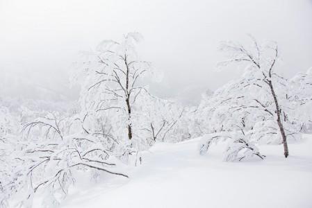 Nowaza Onsenin huipun tuntumasta lähtevillä off-pisteillä on ihan kelvolliset maisemat myös keskinkertaisella näkyvyydellä.