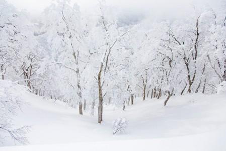 Koskematon ja syvänpehmeä lumipatja puiden välissä odottaa laskijaa. Apus eka!