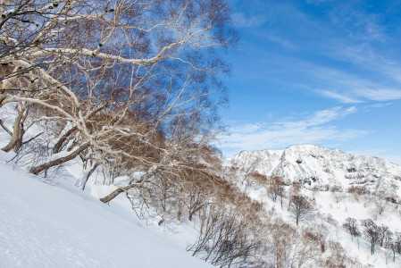 Myokon Akakura Kankon yläoffareilla on enimmäkseen tämän näköistä harvaa metsikkömaastoa. Rinteen kaltevuus vaihtelee pääosin leppoisasta keskijyrkästi viettävään.