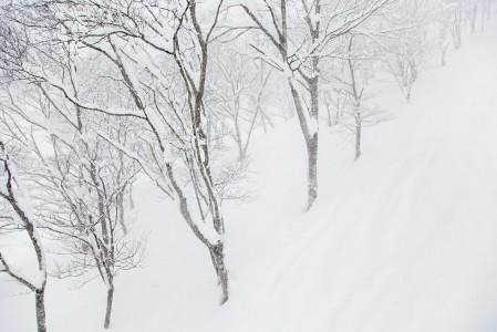 Syvä ja pehmeä valkoinen vaippa on valmistanut itsensä erittäin laskettavaan kuntoon. Onneksi Seki Onsenin lyhyttä puuterilenkkiä ehtii kiertämään päivässä kymmeniä kertoja.