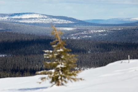 Sallan erämaamaisemat itärajan tuntumassa poikkeavat luonteeltaan jonkun verran läntisemmästä Lapista. Huipulta näkyy pitkälle Venäjän puolelle.