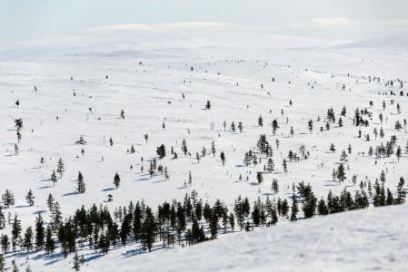 Urho Kekkosen kansallispuiston komeat maisemat avautuvat heti Saariselän takaa. Helpoimmin paikat tavoittaa hiihtämällä. Revontulet loistavat näissä maisemissa jopa 200 vuorokautena talvikaudessa.