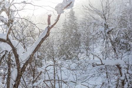 Auringon ja lumisateen taianomainen yhdistelmä Kamui Ski Links -hiihtokeskuksen takamaastossa.