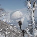 Japani niseko metsä