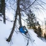 Krippenstein forest skier