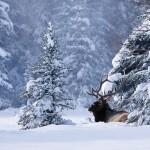 Banff kansallispuisto luonto hiihtokeskus laskettelukeskus