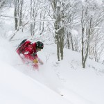 Hakuba Cortina forest powder