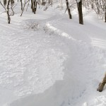 Hakuba Cortina powder tracks