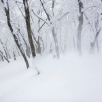 nozawa onsen forest powder