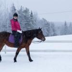 ruka hevostila ratsastus