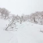 kiroro ski center backside