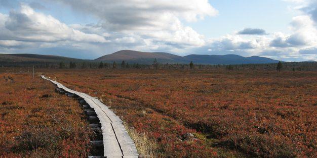 Suomen parhaat vaellusreitit - esittelyssä viisi vaihtoehtoa.